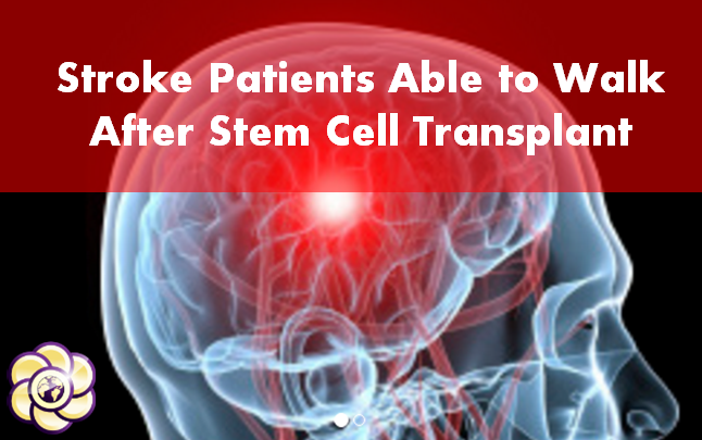 stroke victims able to walk after stem cell transplant