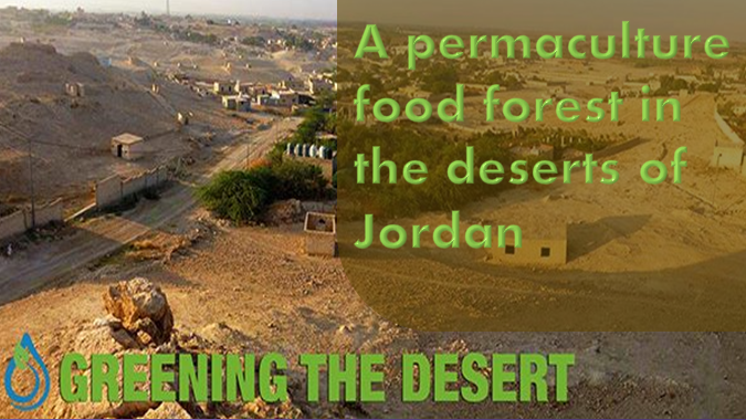 A permaculture food forest in the deserts of Jordan