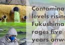 Contamination levels rising as Fukushima rages five years onward