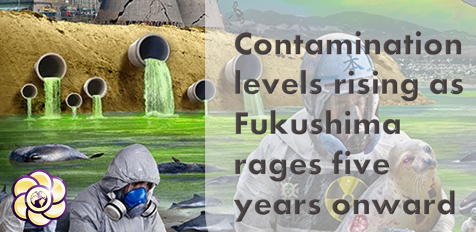 contamination levels rise fukushima five years out