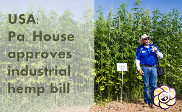USA: Pa. House approves industrial hemp bill