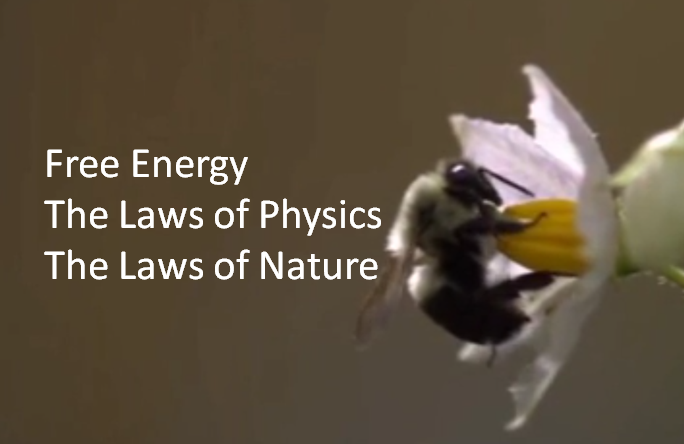 (New Video) Free Energy the Laws of Physics and the Laws of Nature