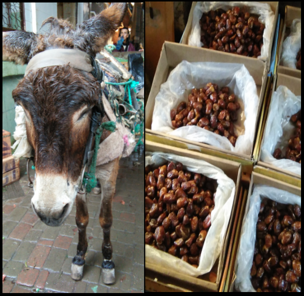 Marrakesh-Donkeys-and-Dates Marrakesh Cooking Tours